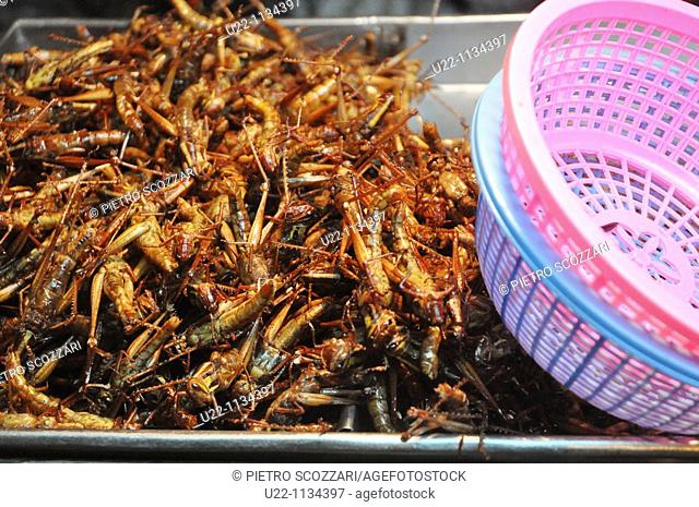 Pattaya (Thailand): fried grasshoppers sold in the street