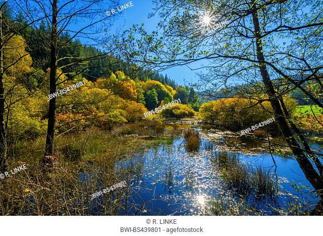 common alder, black alder, European alder (Alnus glutinosa), Forest Lake with Sun in Autumn, Bavaria, Spessart, Heigenbruecken