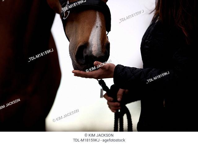 A woman touching a horse muzzle, close up