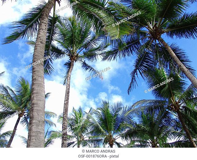 salvador palm trees on the beach shore