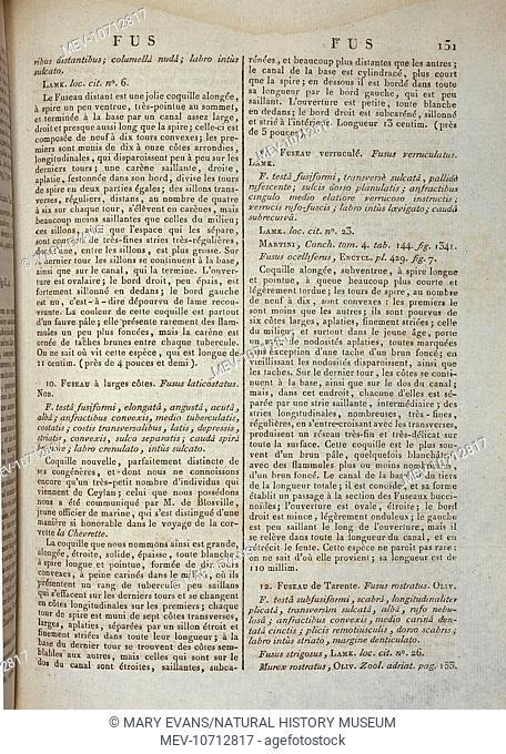 Page 151 from Encyclopedie Methodique, Histoire des Vers par Bruguiere et Lamarck, Vol. 2 by Deshayes G.P., 1827