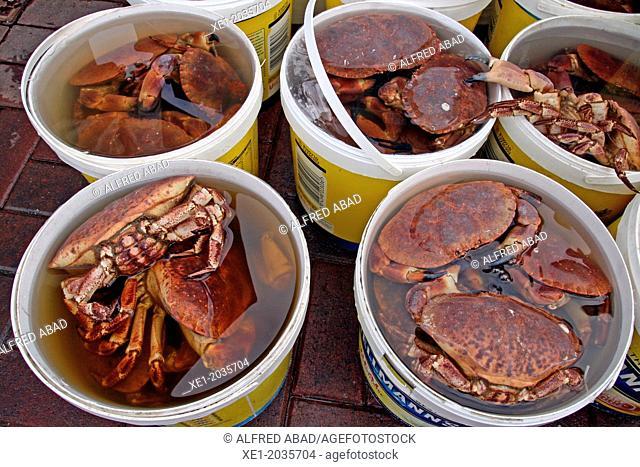 Shellfish, crabs, Oban, Scotland, UK