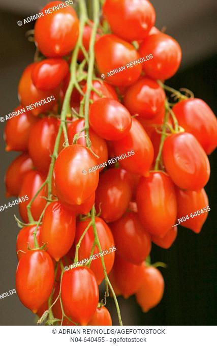 Amalfi tomatoes