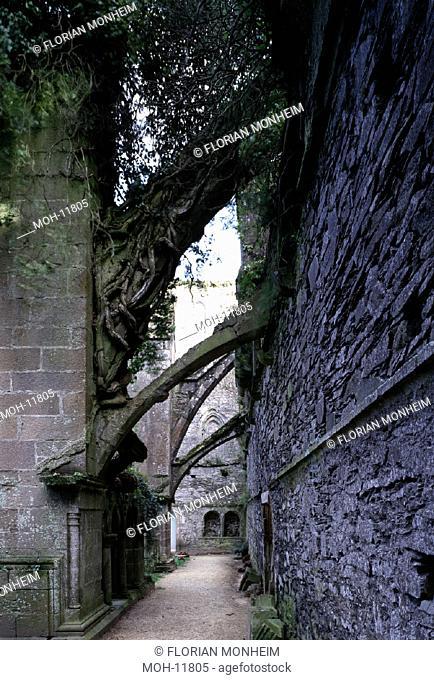 Paimpol (Côtes d'Armor)/Abbaye de Beauport, Strebepfeiler
