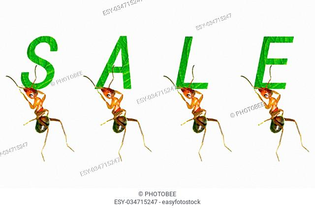 The ants to promote creative picture