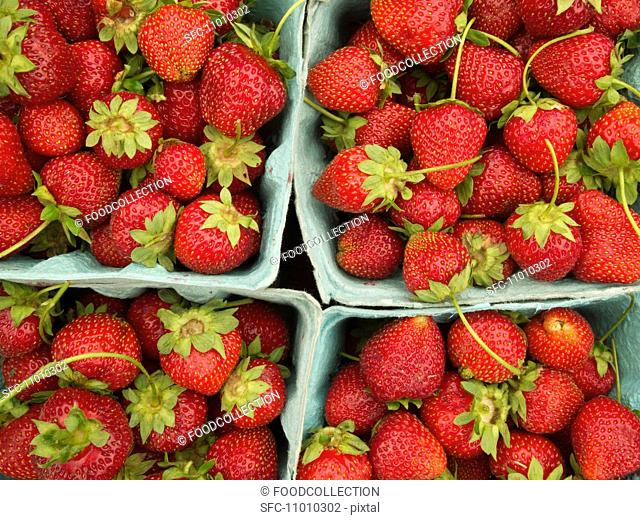 Baskets of Fresh Strawberries at a Farmer's Market in Princeton, NJ