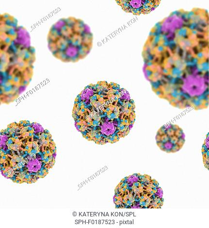 Human papilloma viruses. Seamless computer artwork of human papilloma virus (HPV) virions (particles). This virus consists of a protein capsid enclosing DNA...