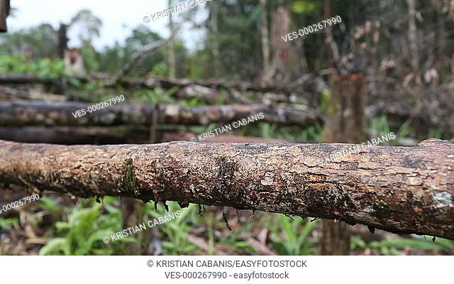 Walking over a tree trunk - feet only, Papua, Indonesia, Southeast Asia