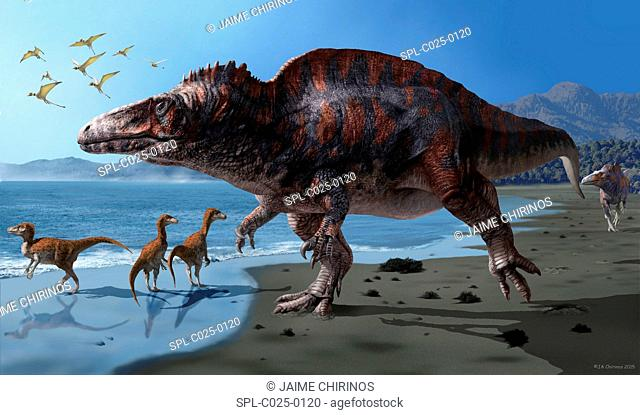 Acrocanthosaurus (Acrocanthosaurus atokensis) artwork. This species of dinosaur lived between 116-110 million years ago (Early Cretaceous) in what is now North...