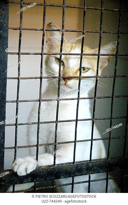 Assagao Goa, India, a cat recovering at the International Animal Rescue center