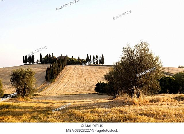 Barley field in front of a Mediterranean house with cypresses in summer