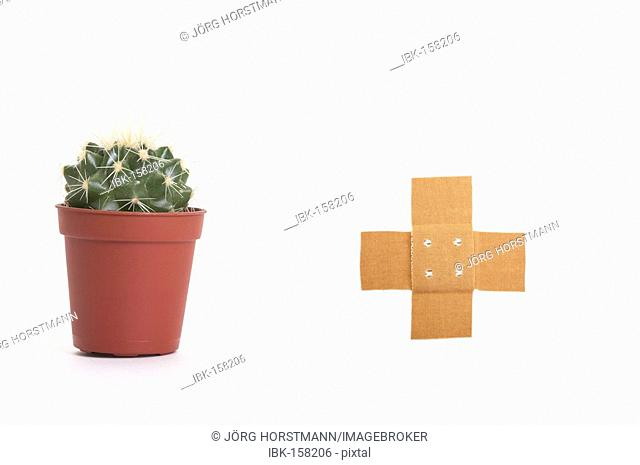 Cactus and band aid (risk of damage)