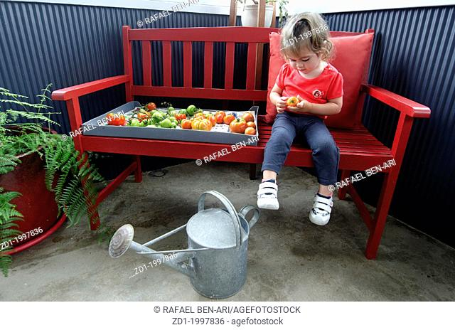 Adorable little girl holds unripe tomatoes