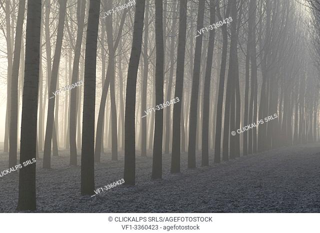 Piedmont Plain,Turin district, Piedmont, Italy. Winter air frost in the Piedmont plain