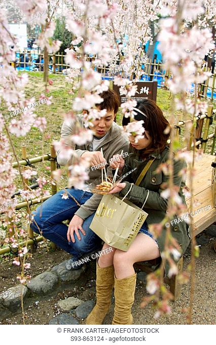 A young Japanese couple sitting on a bench eating some food with chop sticks while surrounded by hanging branches filled with pink cherry blossoms in Maruyama...