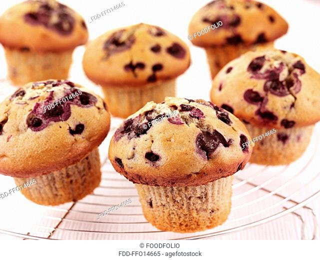Blueberry Muffins - Non Exclusive