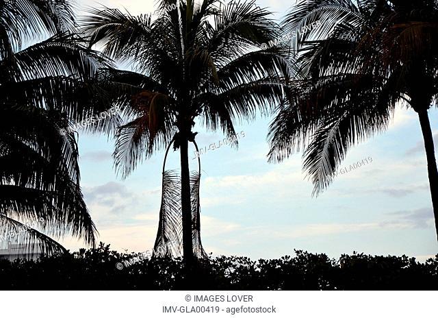 Palms Tree, Hotel Setai, Miami, USA