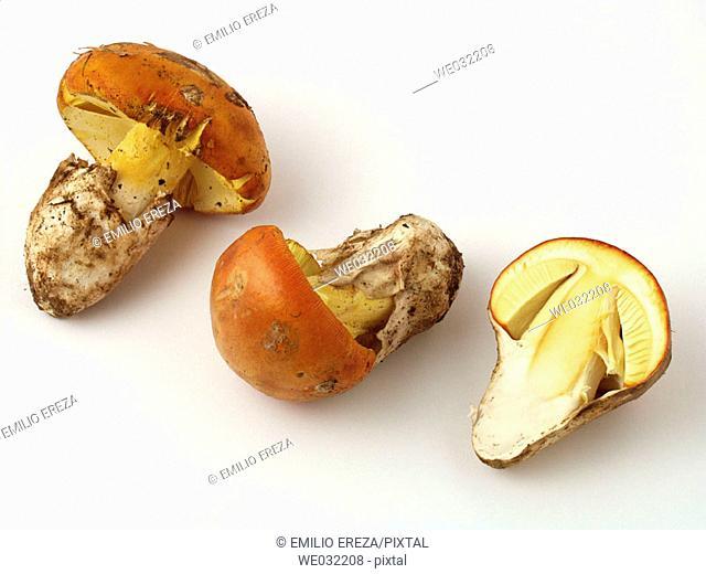 Caesar's Mushroom (Amanita cesarea)