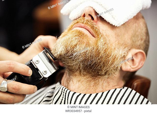 A customer sitting in the barber's chair, with a hot towel on his face, and a barber trimming his beard wth an electric trimmer