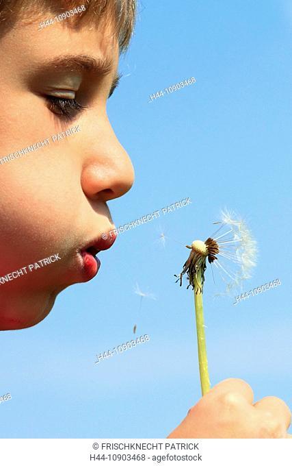 10, activity, flower, boy, Dandelion, detail, flight, spring, sky, boy, child, boy, dandelion, air, draft, dandelion seed, close-up, puff, blowball, puffing