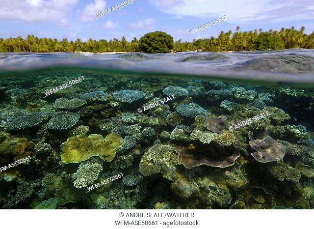 Over under image of Coral Reef, Acropora, Majikin Island, Namu Atoll, Pacific, Marshall Islands
