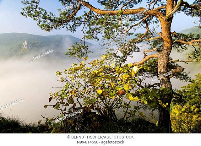 Middle range mountains in the Franconian Switzerland, castle ruin Neideck, Jurassic rocks, pine tree, deciduous forest, colours of autumn and fog in river...