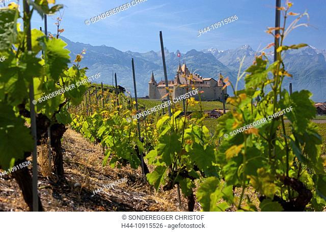 castle, wine, shoots, vineyard, wine cultivation, canton, Vaud, Waadt, Switzerland, Europe, Rhone valley, Aigle