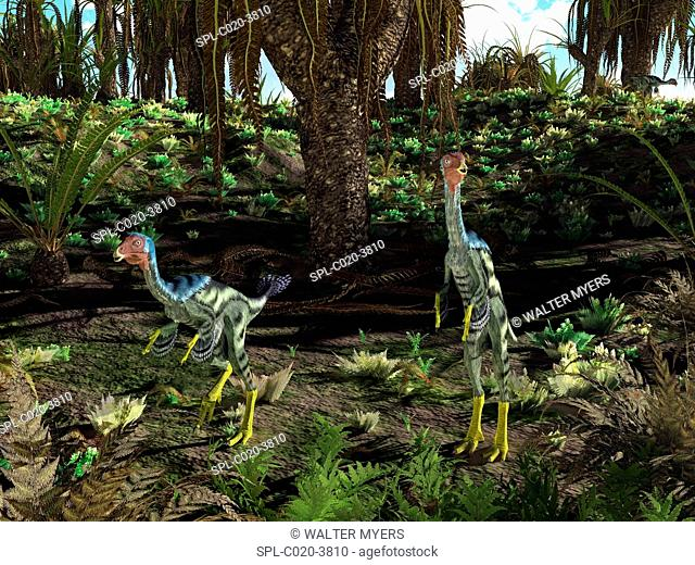 Artwork of peacock-sized theropod dinosaurs of the genus Caudipteryx wandering a landscape dominated by cycad-like seed plants of the genus Williamsonia 125...