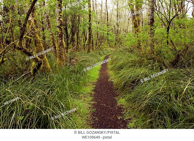 Forest Trail - Cape Disappointment State Park, Washington