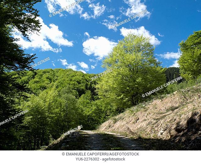 Vigezzo in spring, Piedmont, Italy