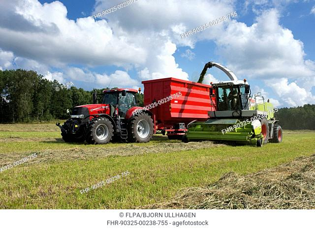 Claas Jaguar 850 self propelled forage harvester, chopping grass and loading Case tractor with trailer for silage, Alunda, Uppland, Sweden, August