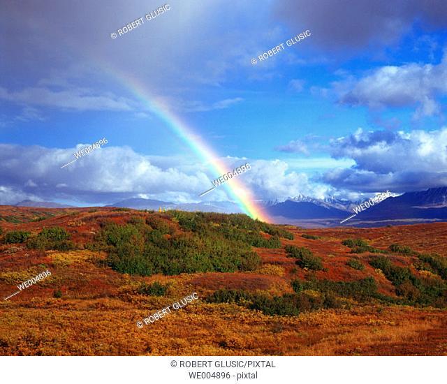 Denali National Park. Alaska. USA