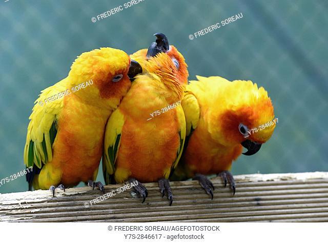 Parrots in Hallim Park, Jeju island, South Korea