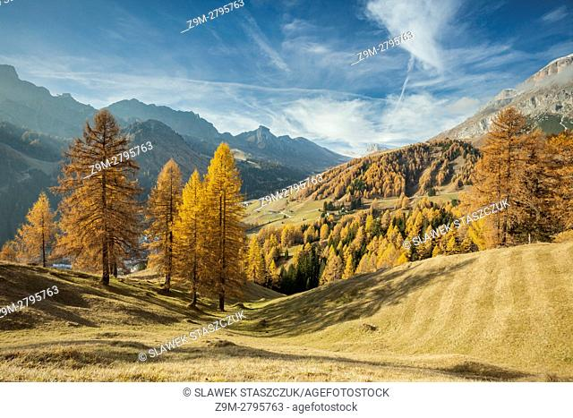 Autumn morning on an alpine meadow near Arabba, Dolomites, Italy