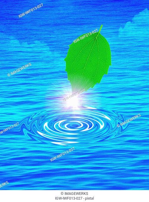 Pointed tip of leaf shining digital composite