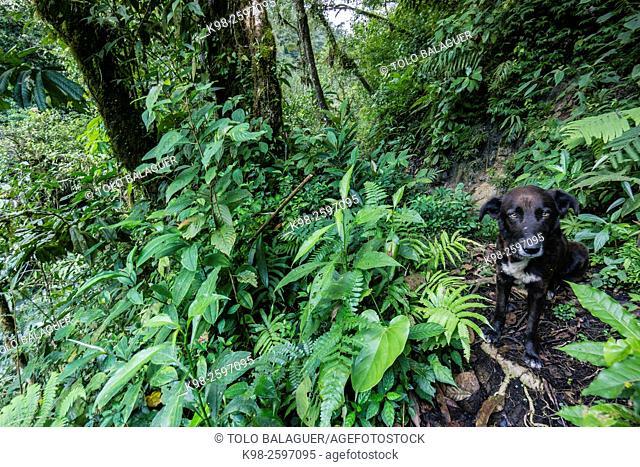 bosque tropical, Lancetillo, La Parroquia, zona Reyna, Quiche, Guatemala, Central America