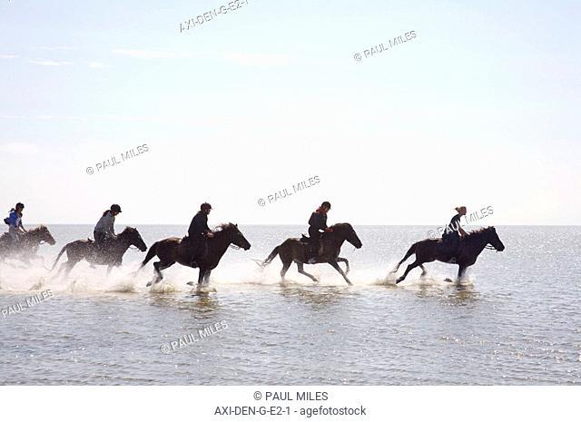 Icelandic horses on Ronnerne