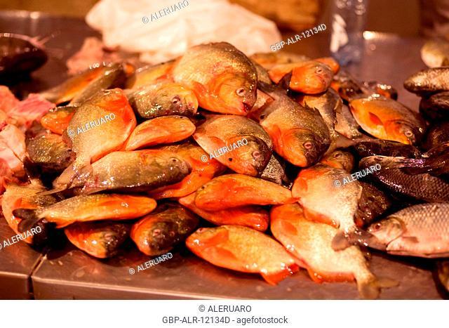 Fish market, Fair of the Fish, Barão de São Domingos Collapse, Amazônia, Manaus, Amazonas, Brazil