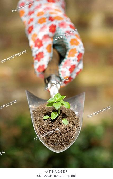 Hand holding plant on garden trowel