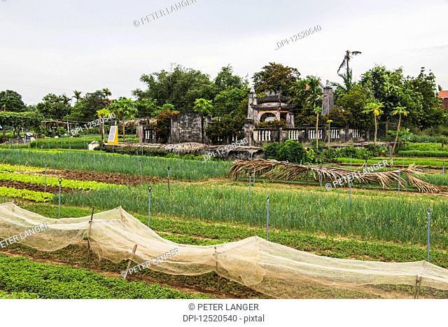 Herb fields; Hoi An Ancient Town, Quang Nam, Vietnam
