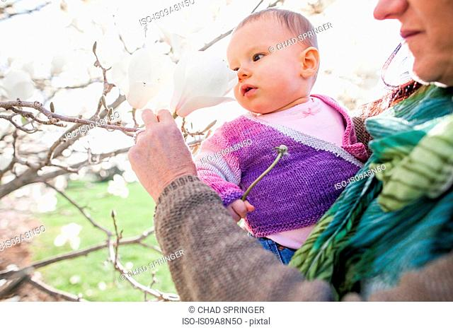 Close up of baby girl and grandmother amongst magnolia blossom