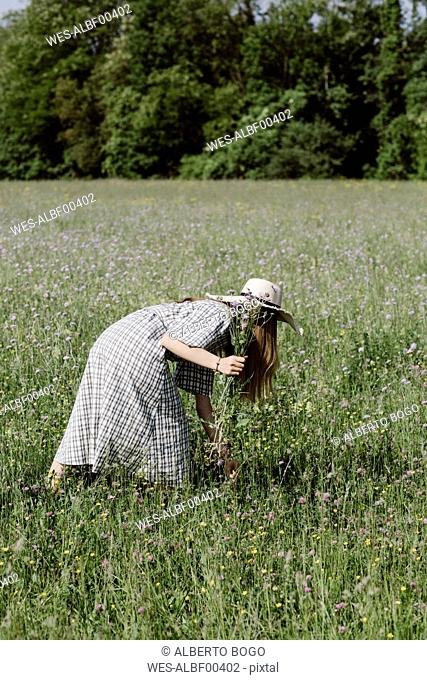 Italy, Veneto, Young woman plucking flowers and herbs in field