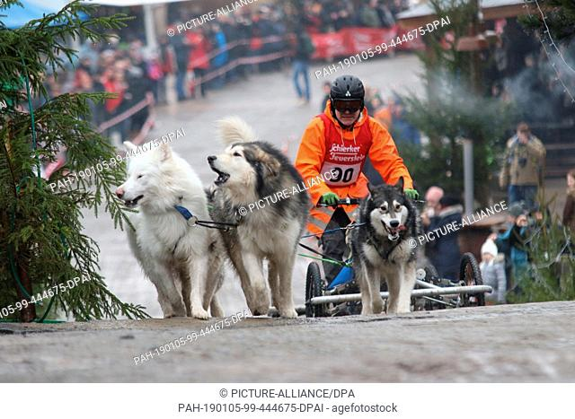 05 January 2019, Saxony-Anhalt, Hasselfelde: Frank Trinkler will start with his 4 Alaska Malamute at the 19th International Sled Dog Race in the western town of...