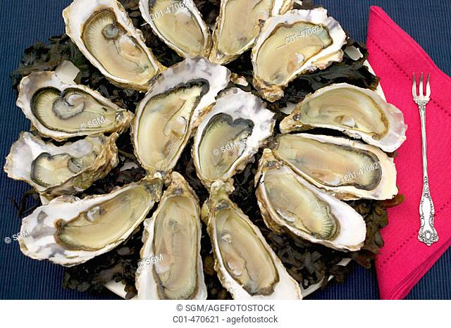 Cancale creuse number 2 oyster platter with a red napkin and a silver fork. Brittany. France