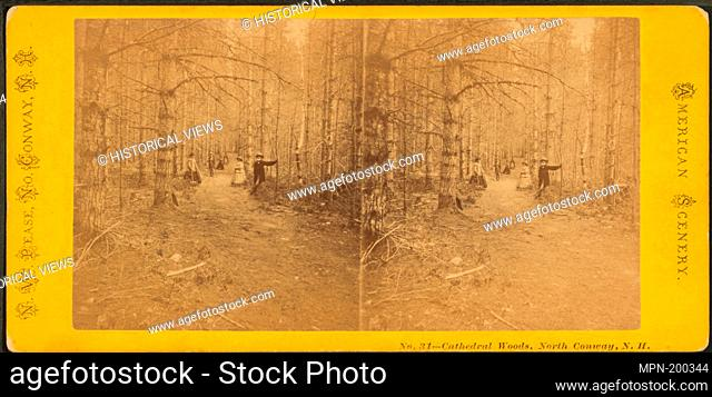 Cathedral Woods, North Conway, N.H. Additional title: American scenery. Pease, N. W. (Nathan W.) (1836-1918) (Photographer). Robert N