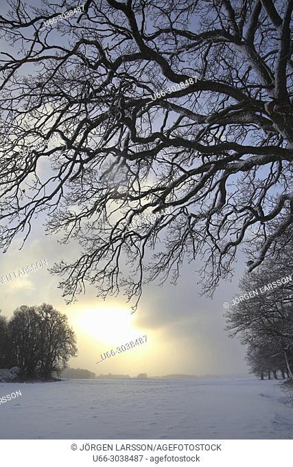 Winter landscape at Morko, Sodermanland, Sweden