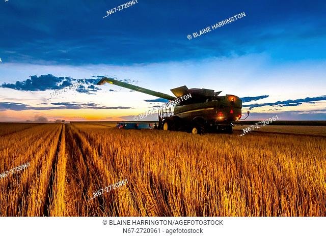 Combines working at twilight during the wheat harvest, Shields & Sons Farming, Goodland, Kansas USA