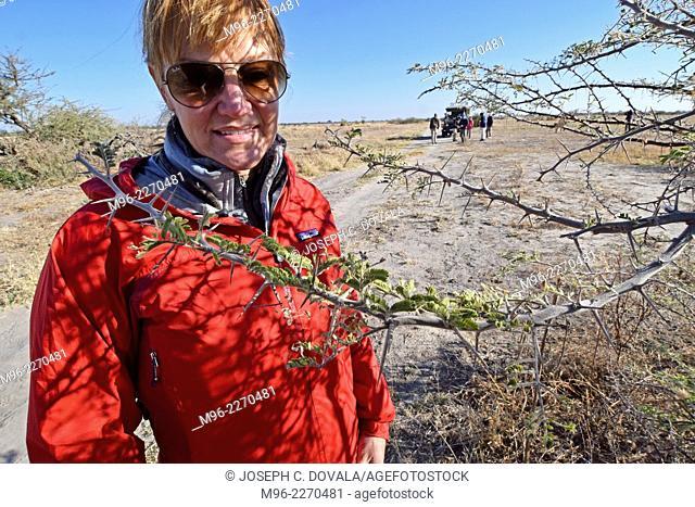 Woman looking at long thorns of acacia tree, Savuti, Botswana, Africa