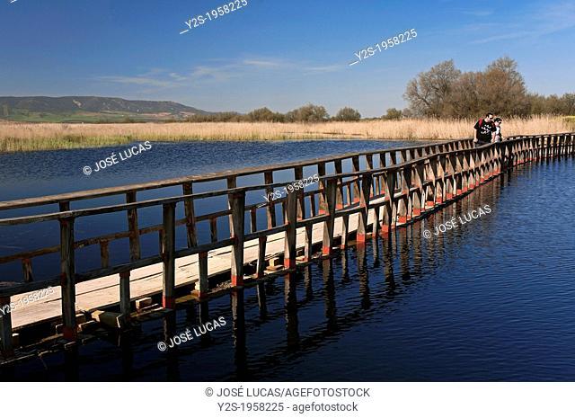 Tablas de Daimiel National Park, Ciudad Real-province, Castilla - La Mancha, Spain, Europe