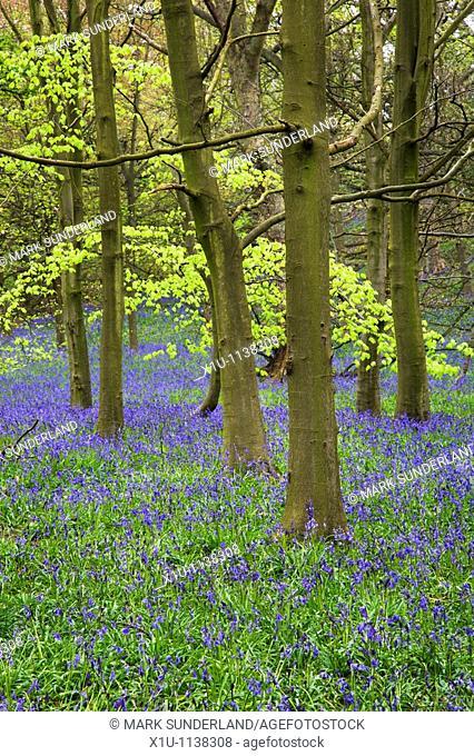 Middleton Woods Ilkley West Yorkshire England